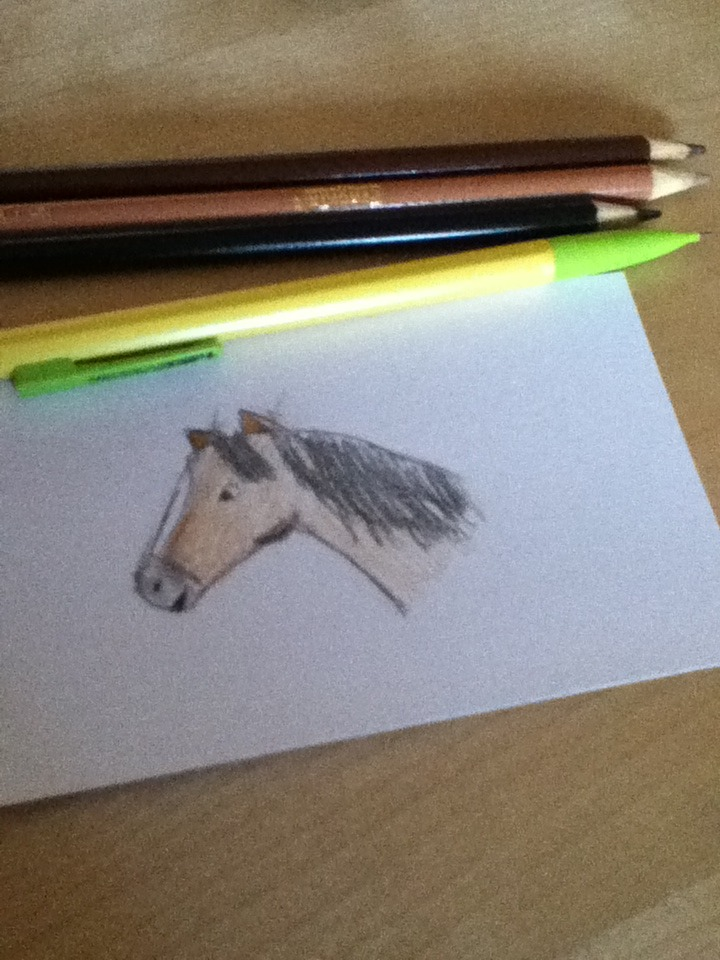 Picture of How to Draw a Horse's Face