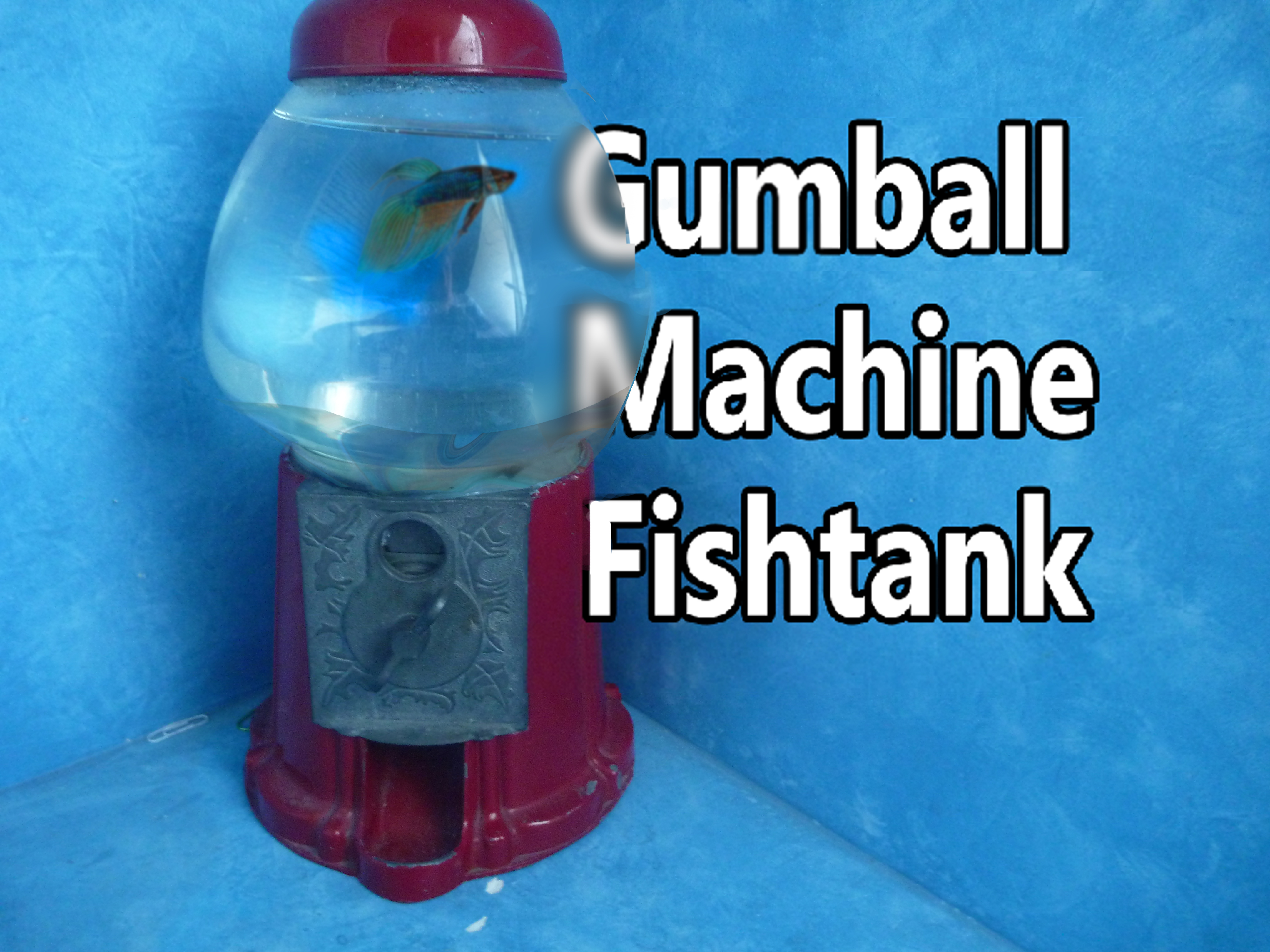 Picture of Gumball Machine Fishtank