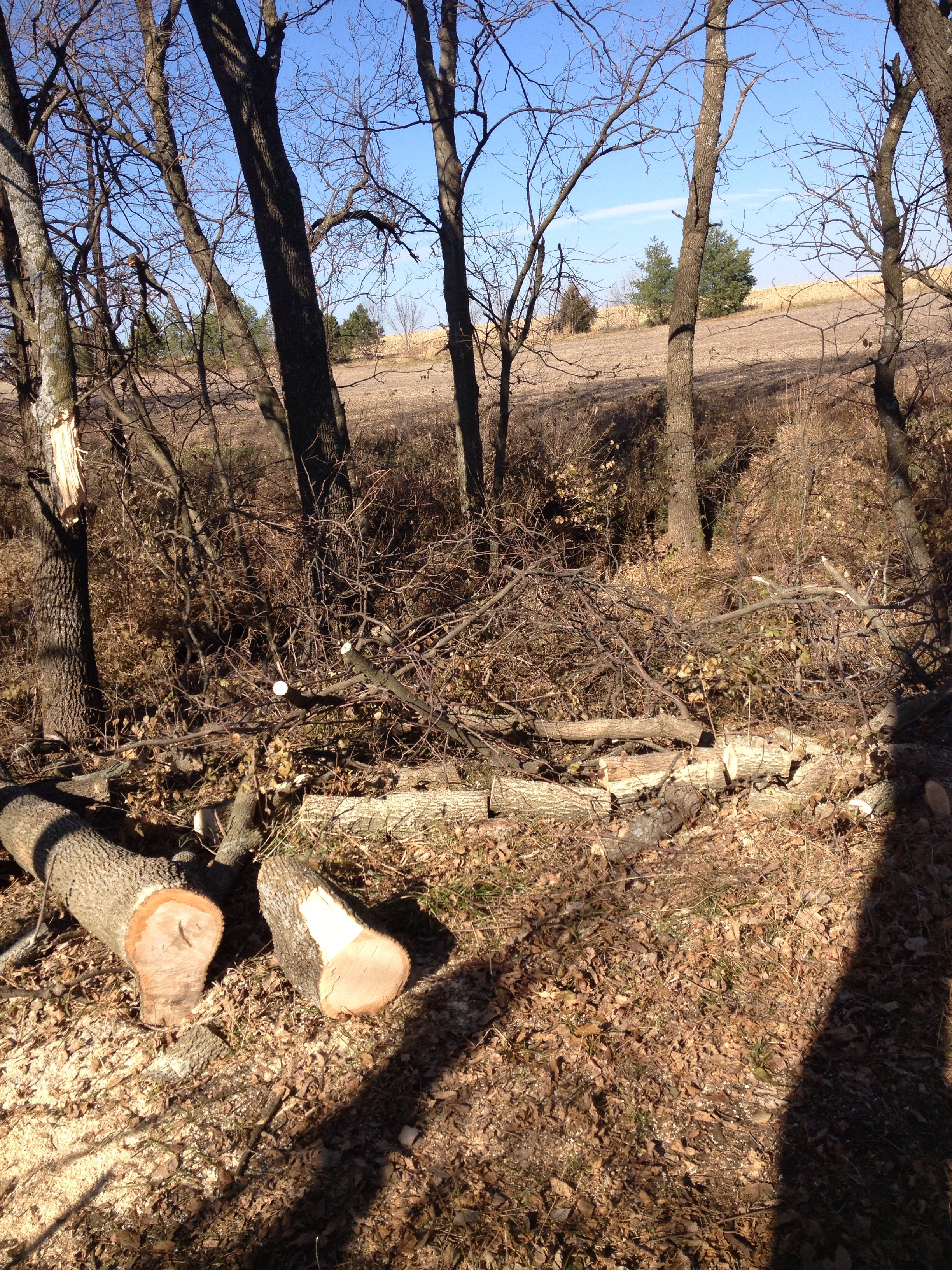 Picture of Cut Down the Tree