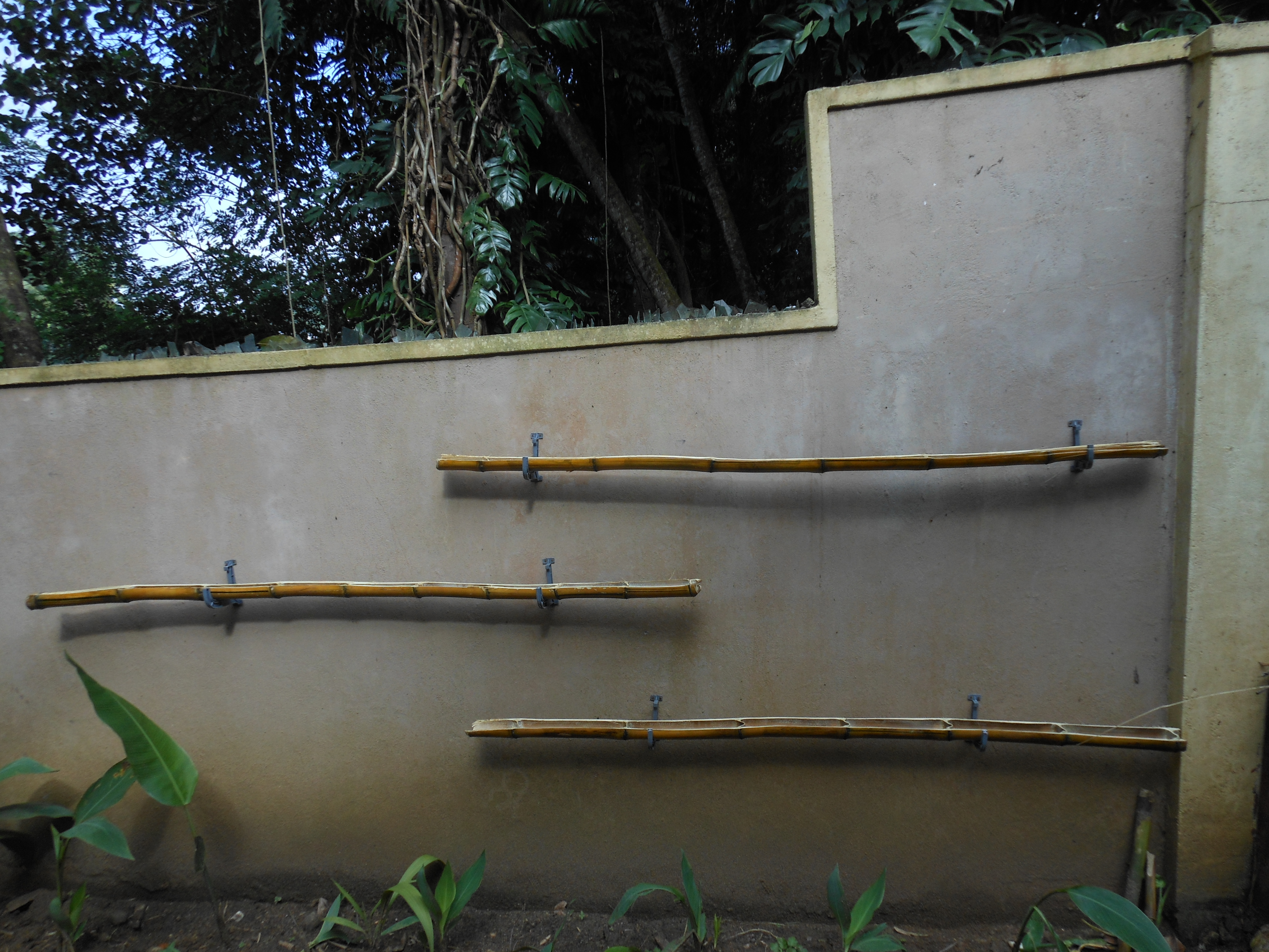 Picture of Simple Wall Garden