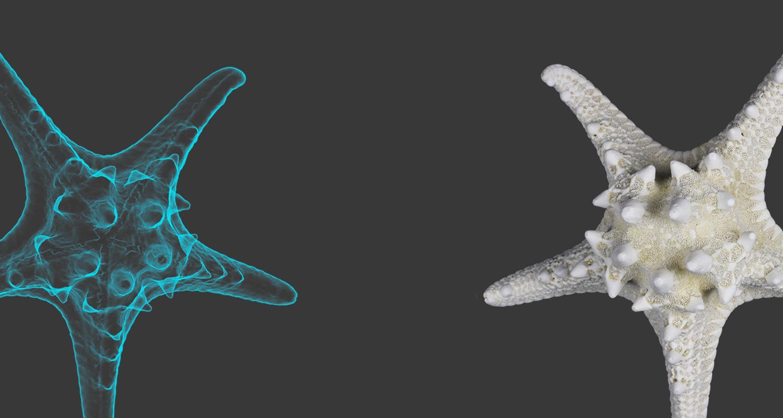 3D Scanning Class