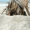 Natural Beach Sunshade