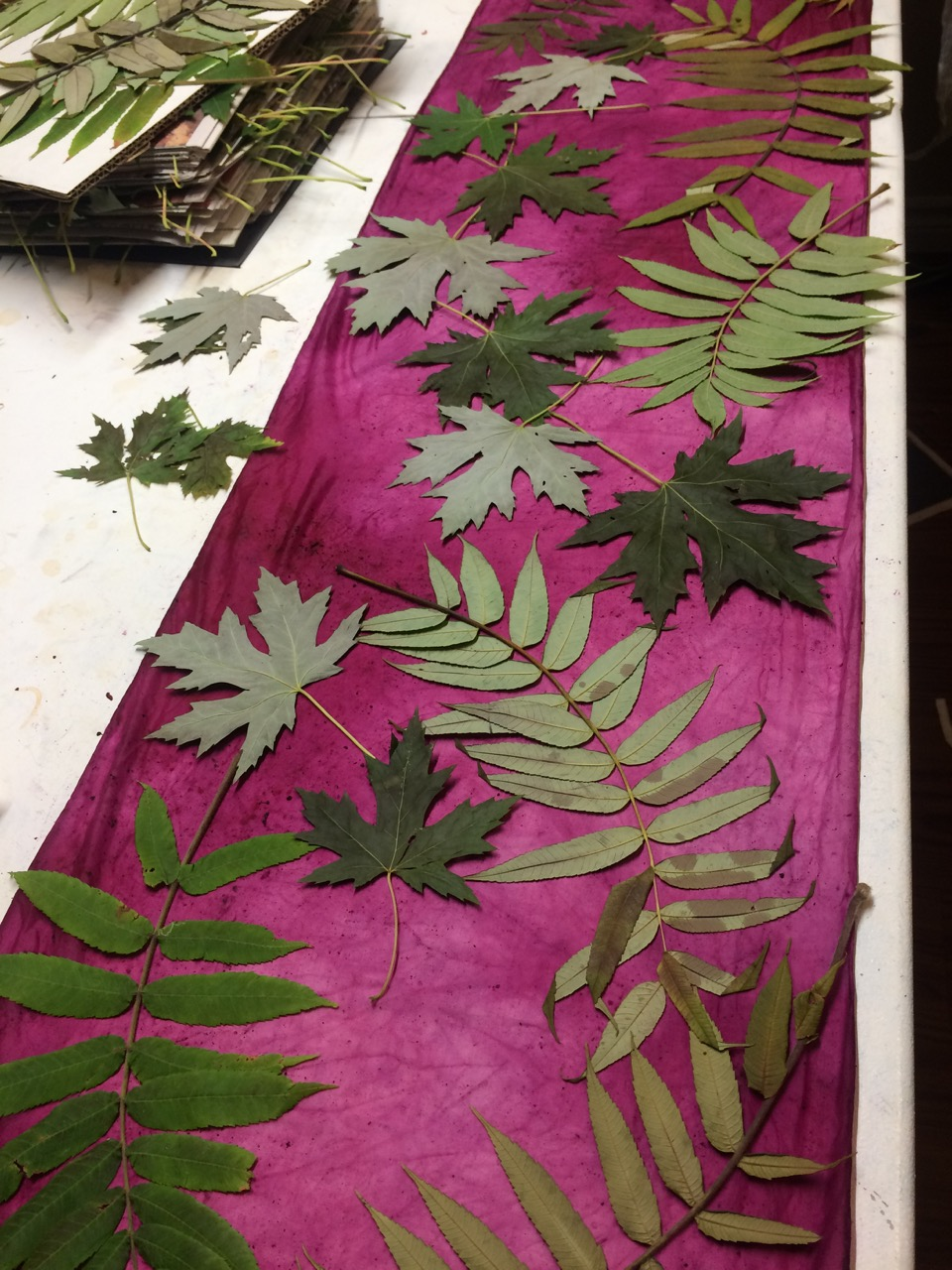 Picture of Design With Leaves