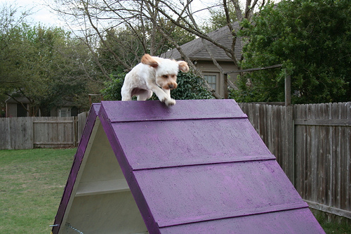 Picture of DIY Dog Agility A-Frame