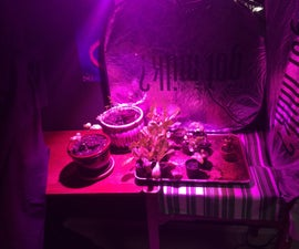 100 Watt LED Grow Light