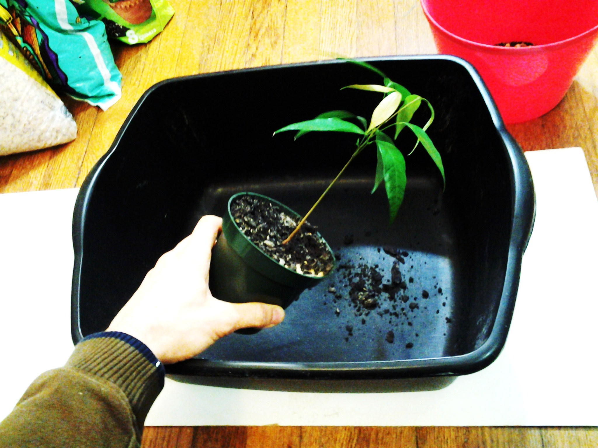 Picture of Get Your Plants Ready for Transplanting