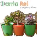 Planta Rhei: everything flows.