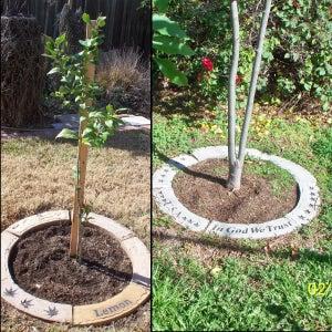 Place New Segments Around Trees