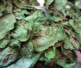 Baked Spinach Chips
