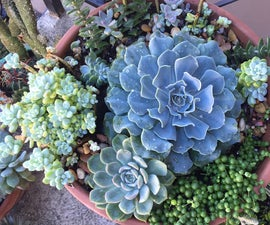 How to Create an Awesome Succulent Planter