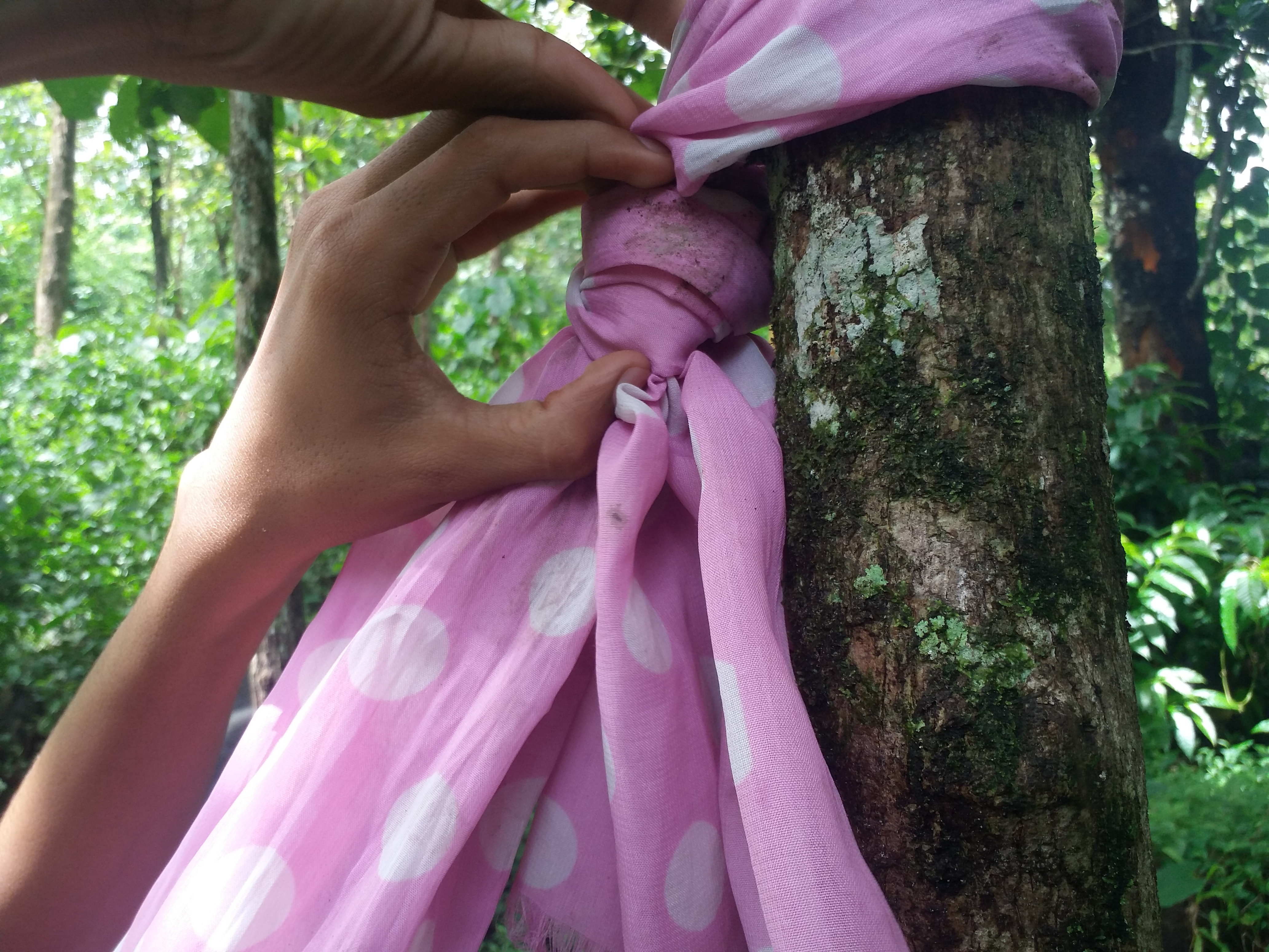 Picture of  Tie the Edges of the Saree in Two Trees