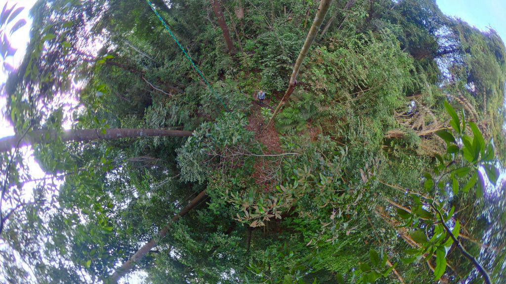 Picture of 360 Strategies - Canopy Trap