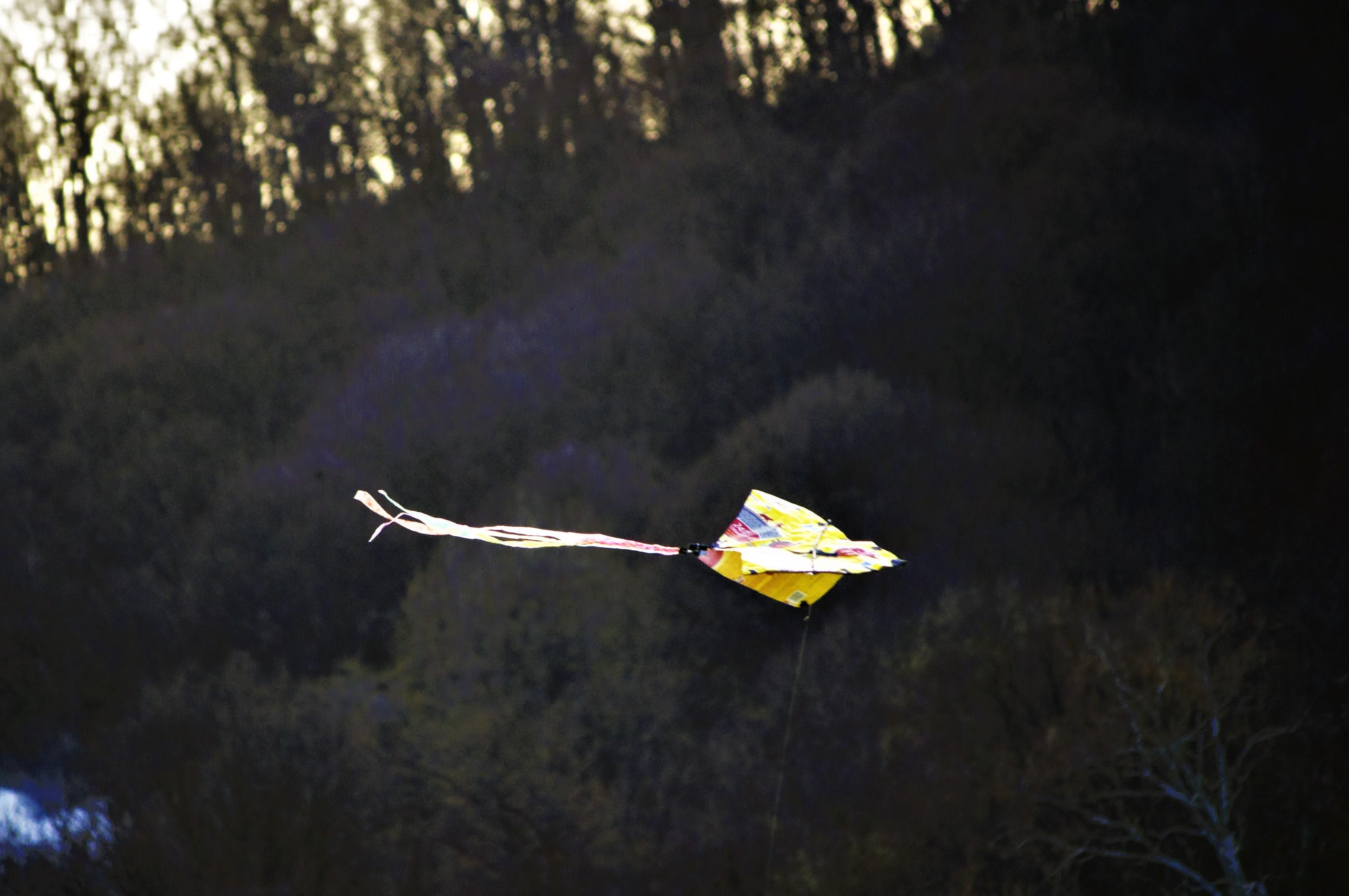 Picture of Kitty-Litter Delta  -  DIY Kite
