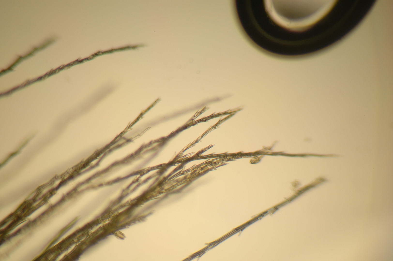 Picture of Enjoy Your New Microscope.