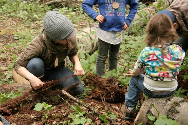 Harvesting Spruce Root