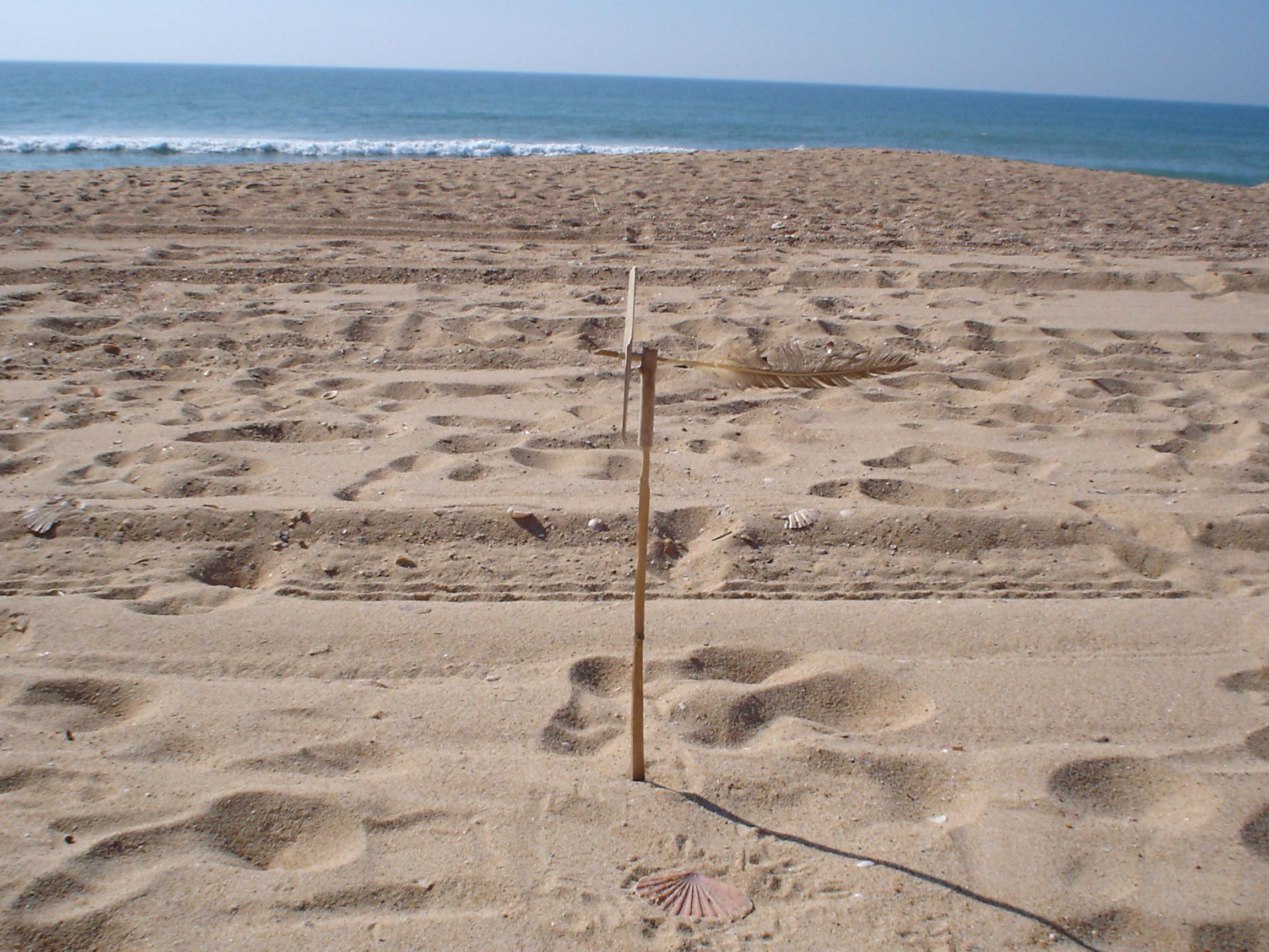 Picture of Beachcomber Weathervane