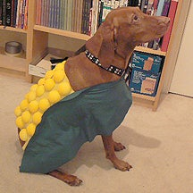 """How to Turn Your Dog Into a """"Corn Dog"""" for Halloween"""