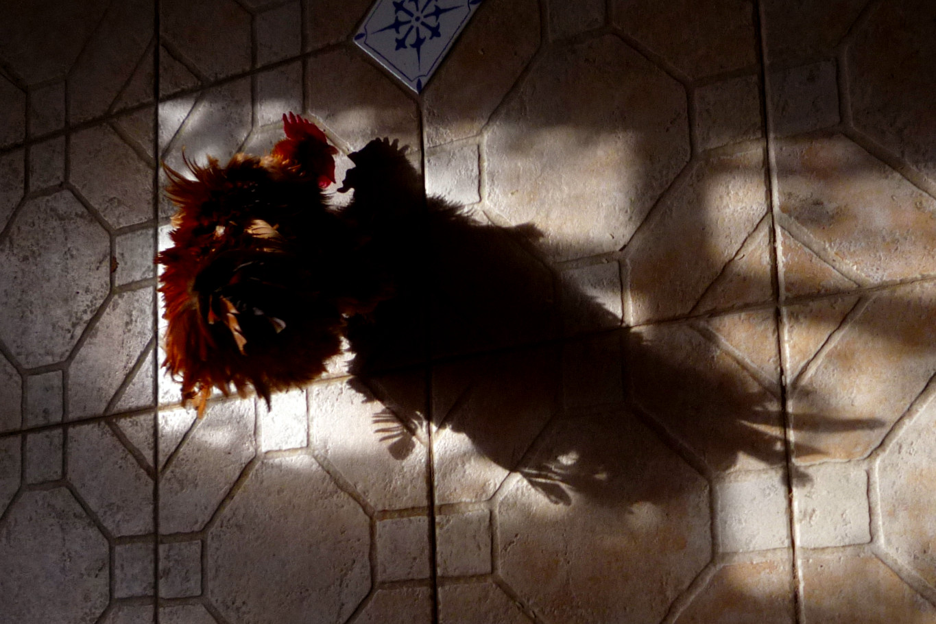 Picture of Stress in Organic Chickens - How to Implement Strategies to Prevent and Stop Stress.