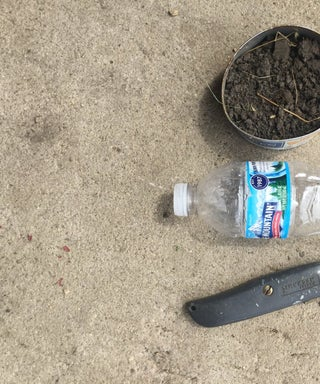 How to Make a Water Bottle Plant Starter