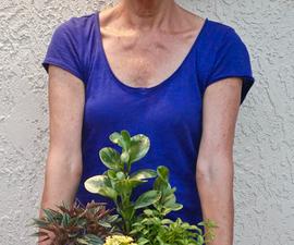 Dish Gardening 101: Designing, Planting & Care