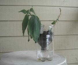 The Pop Bottle plant Pot----A improvised plant pot from a 2-liter pop bottle