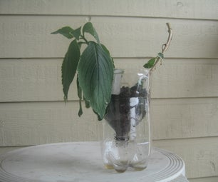The Pop Bottle Plant Pot----A Improvised Plant Pot From a 2-liter Pop Bottle