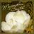 magnoliasouth