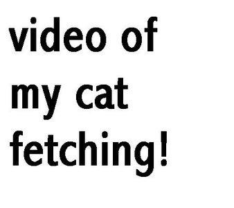 See Spot Fetch