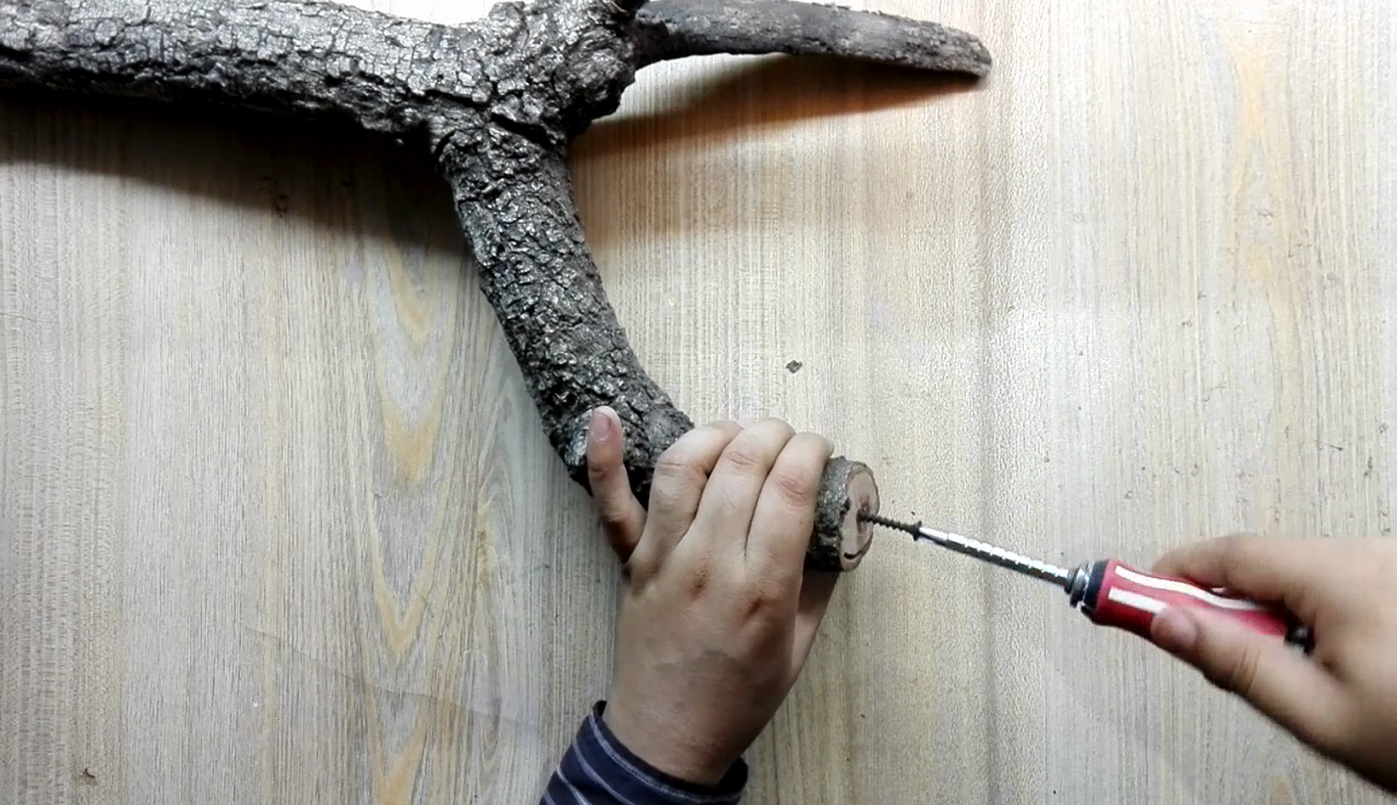 Picture of Shape of Branch