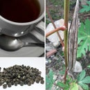Coffee from Okra Seeds