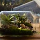 Super Simple Terrarium