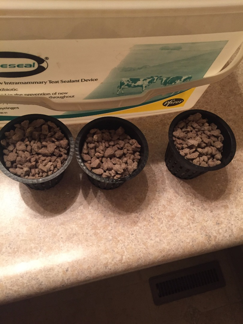 Picture of Transplant Your Seedlings and Preparing Your System