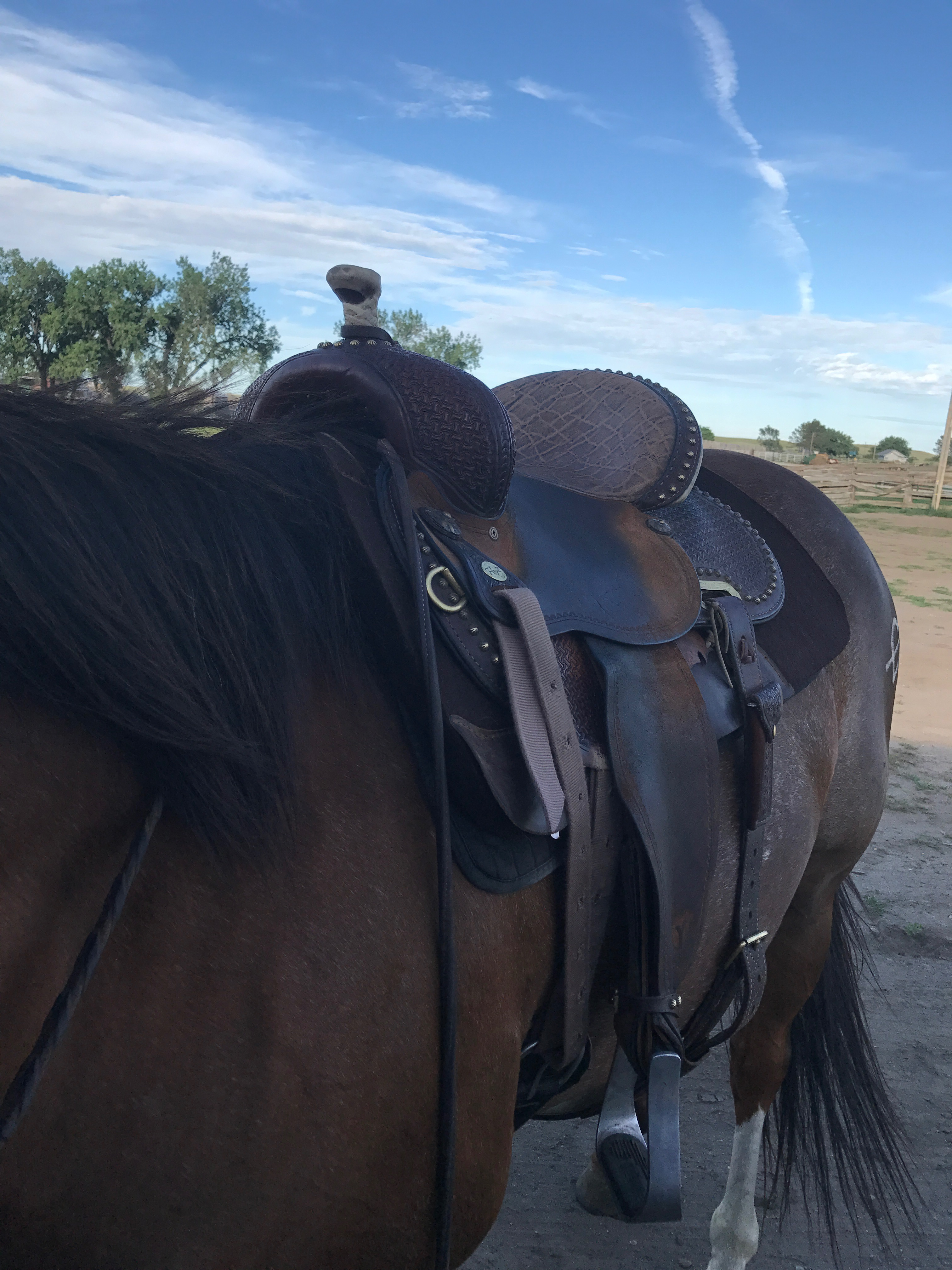 Picture of How to Saddle a Horse