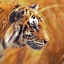 fast_as_cheetah