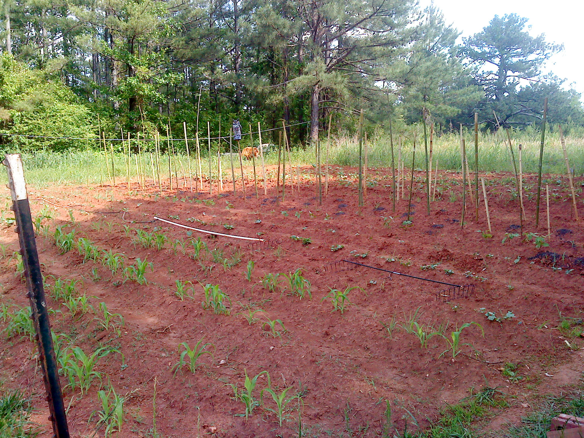 Picture of Our Red Dirt Garden