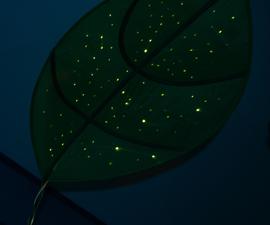 Giant Leaf Planetarium