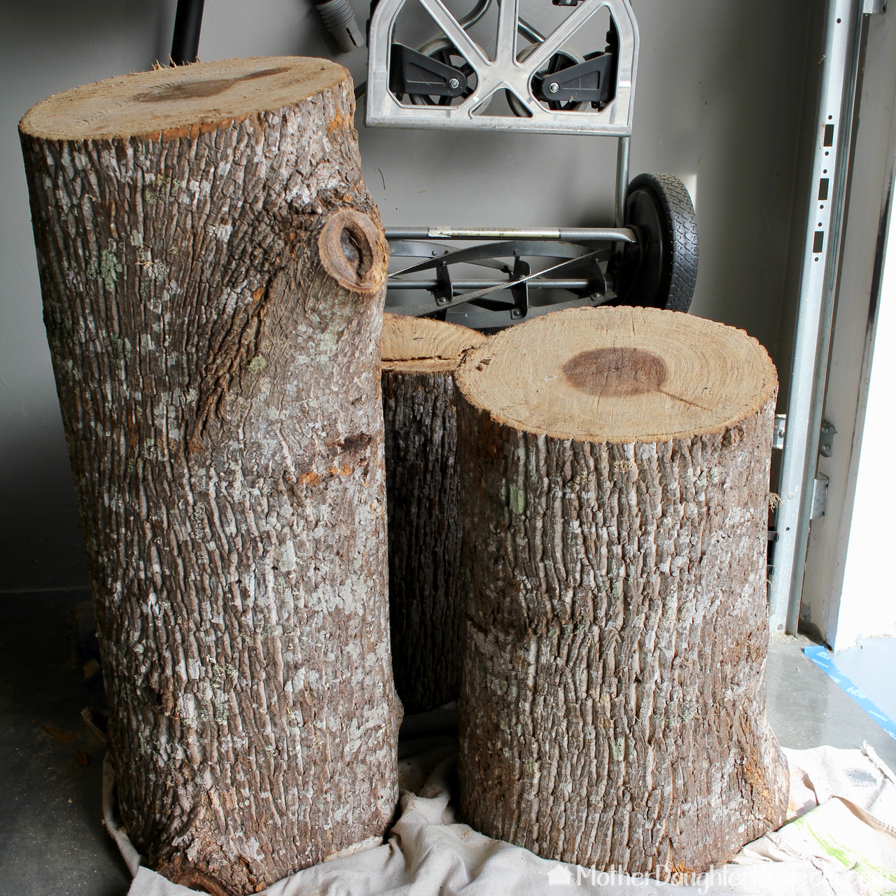 Picture of Allow Time for Logs to Dry and Debark