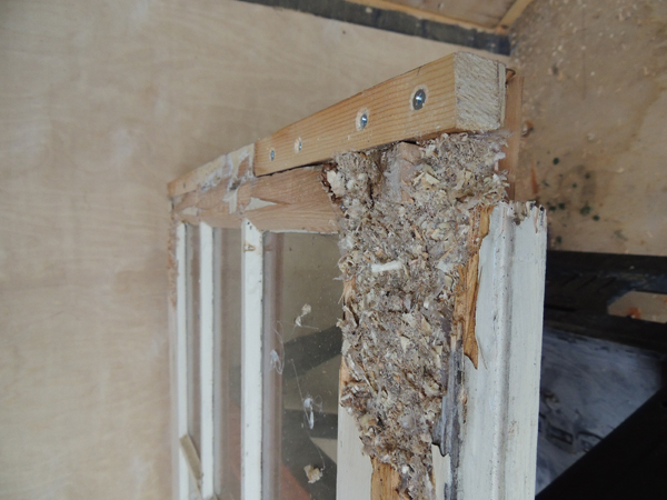 Picture of Repairing Discarded Partially Rotten French Doors