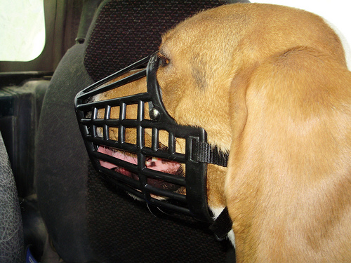 Picture of Plastic Basket Muzzle
