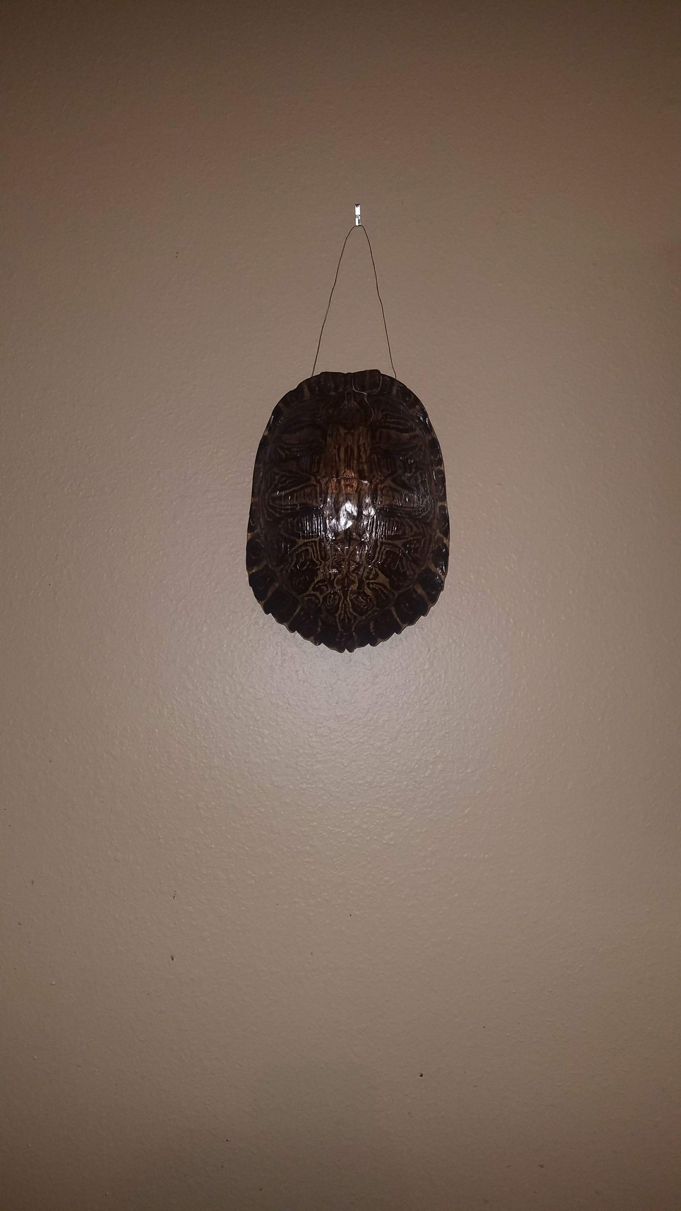 Picture of Turtle Shell Hanging