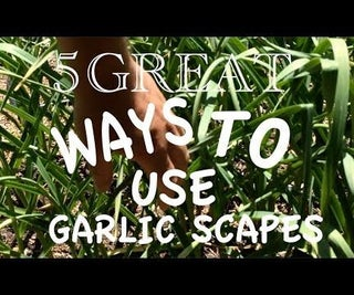 5 Creative (and Delicious) Uses for Garlic Scapes