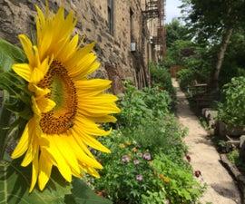 Build a Community Garden