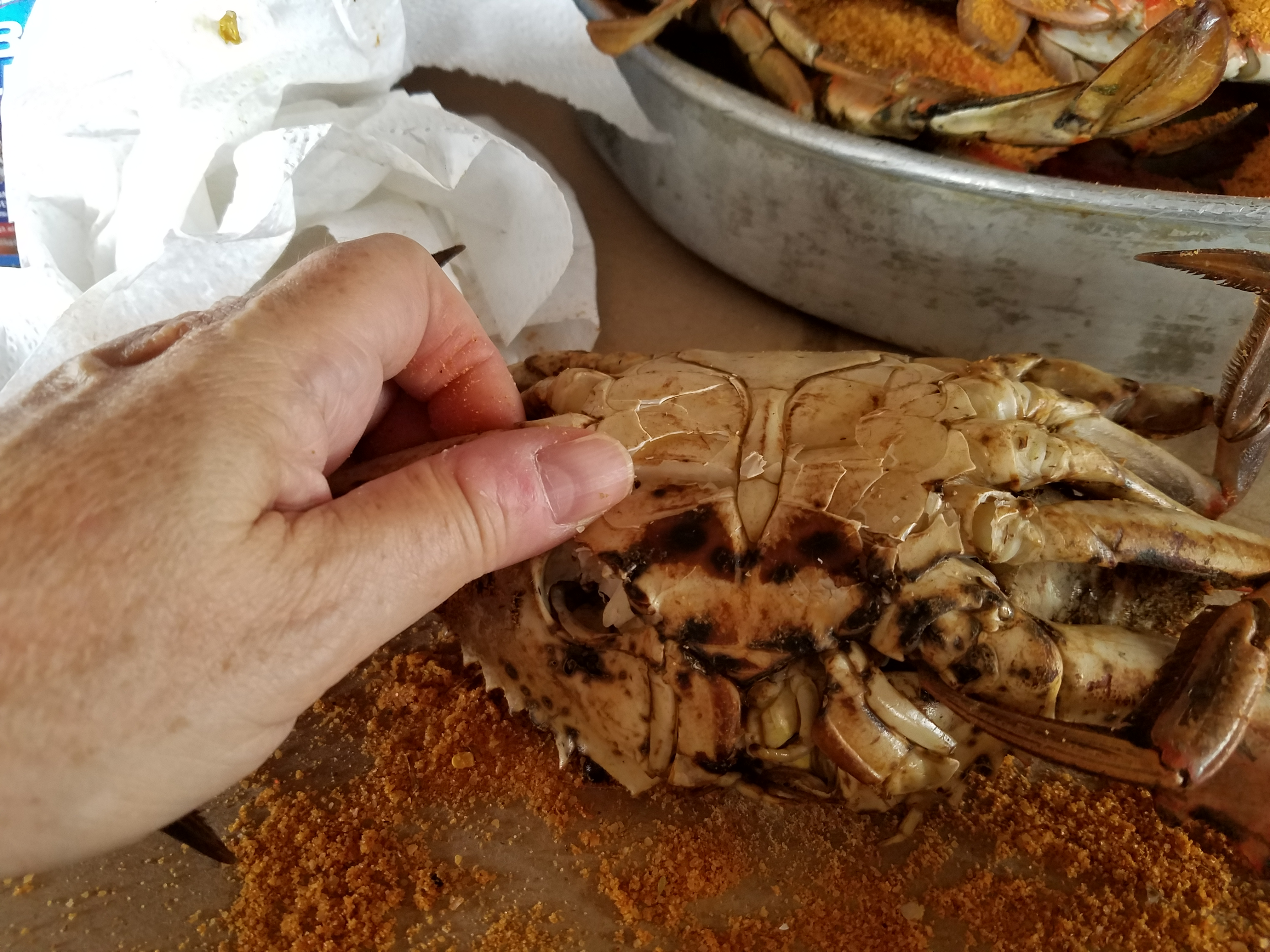 Picture of Turn the Crab on Its Back to Begin