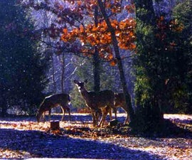 Not in My Garden You Don't ... Deer (and Other Safe, Frugal Forms of Pest Control)