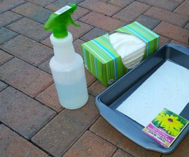 How to Soak and Plant ITTY-BITTY Seeds
