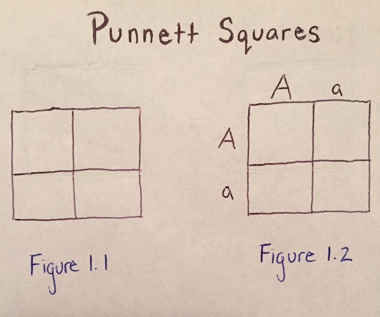 Surprising Using Punnett Squares To Calculate Phenotypic Probabilities 6 Steps Wiring Digital Resources Remcakbiperorg