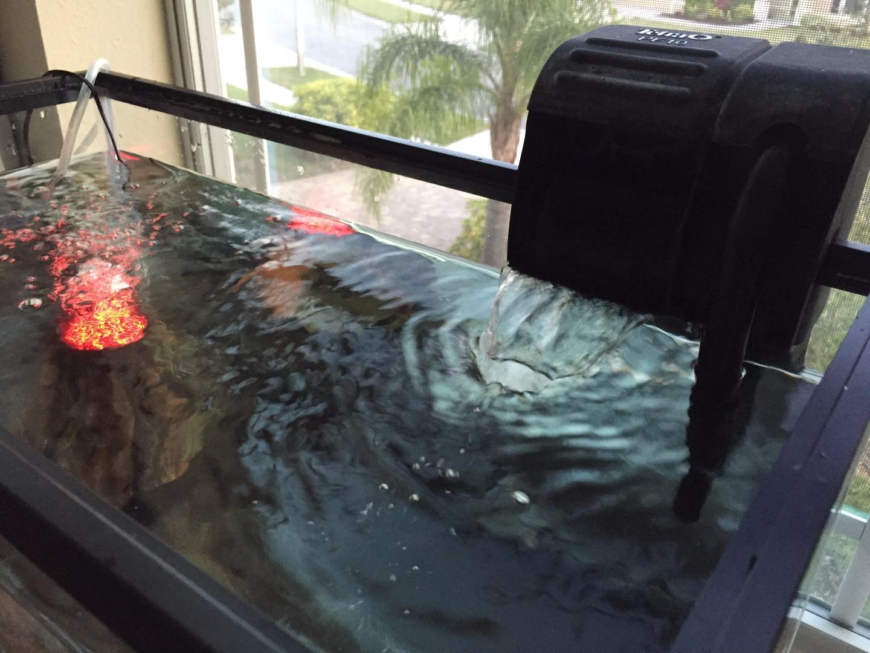 Picture of Aquarium Setup