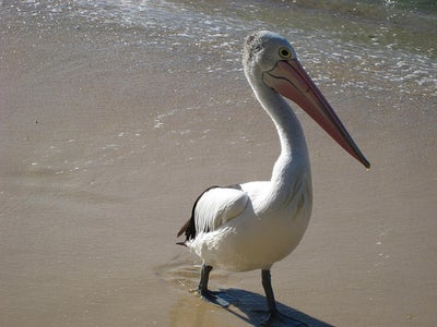 Pelican, a Static Html Blog Generator
