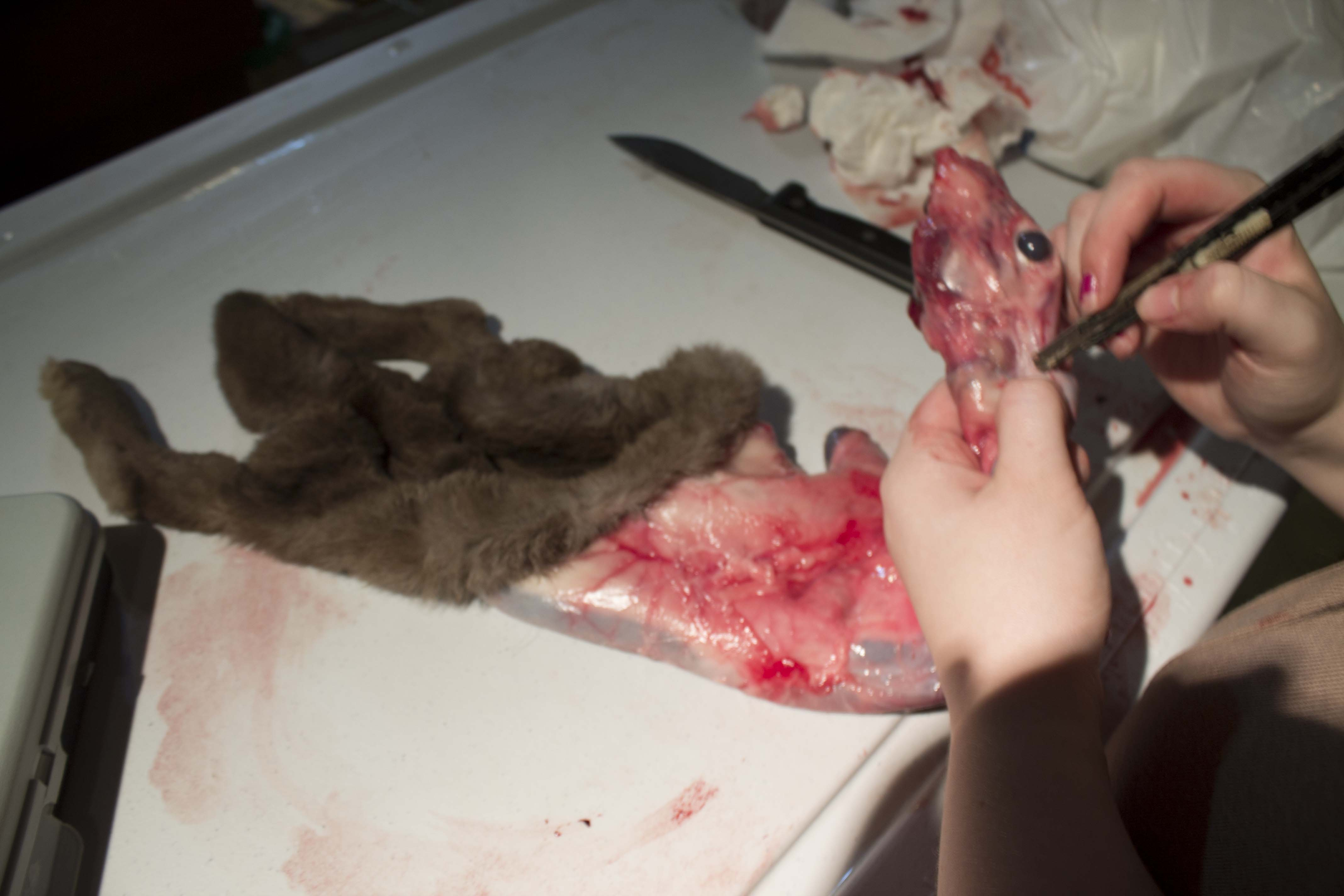 Picture of Step #4- Removing the Pelt Upper Body