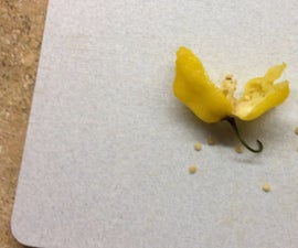 Experiment: Can You Germinate Seeds From a Frozen Pepper?